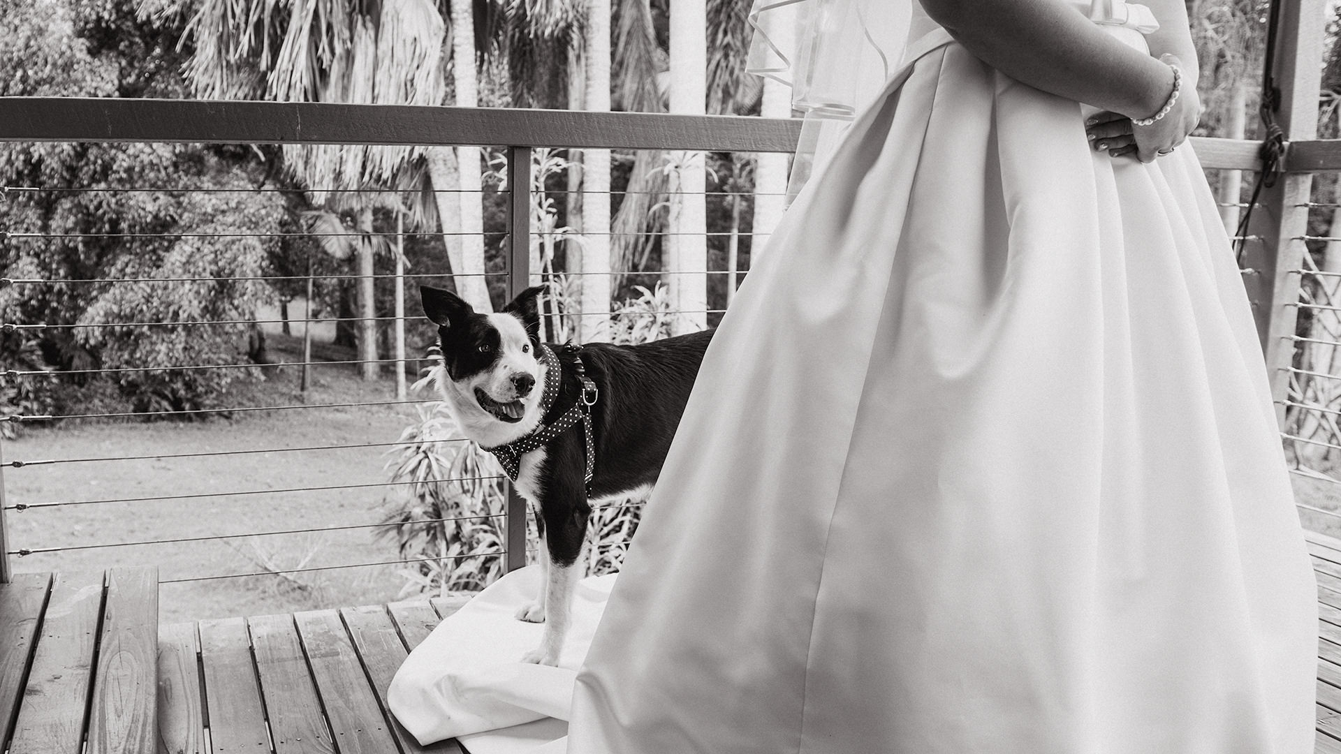bride+border+collie
