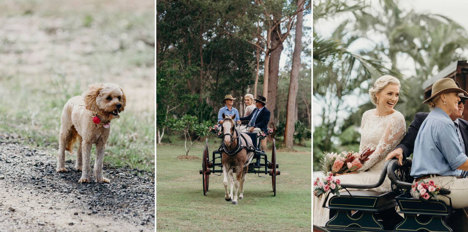 Bride in Horse and Buggy