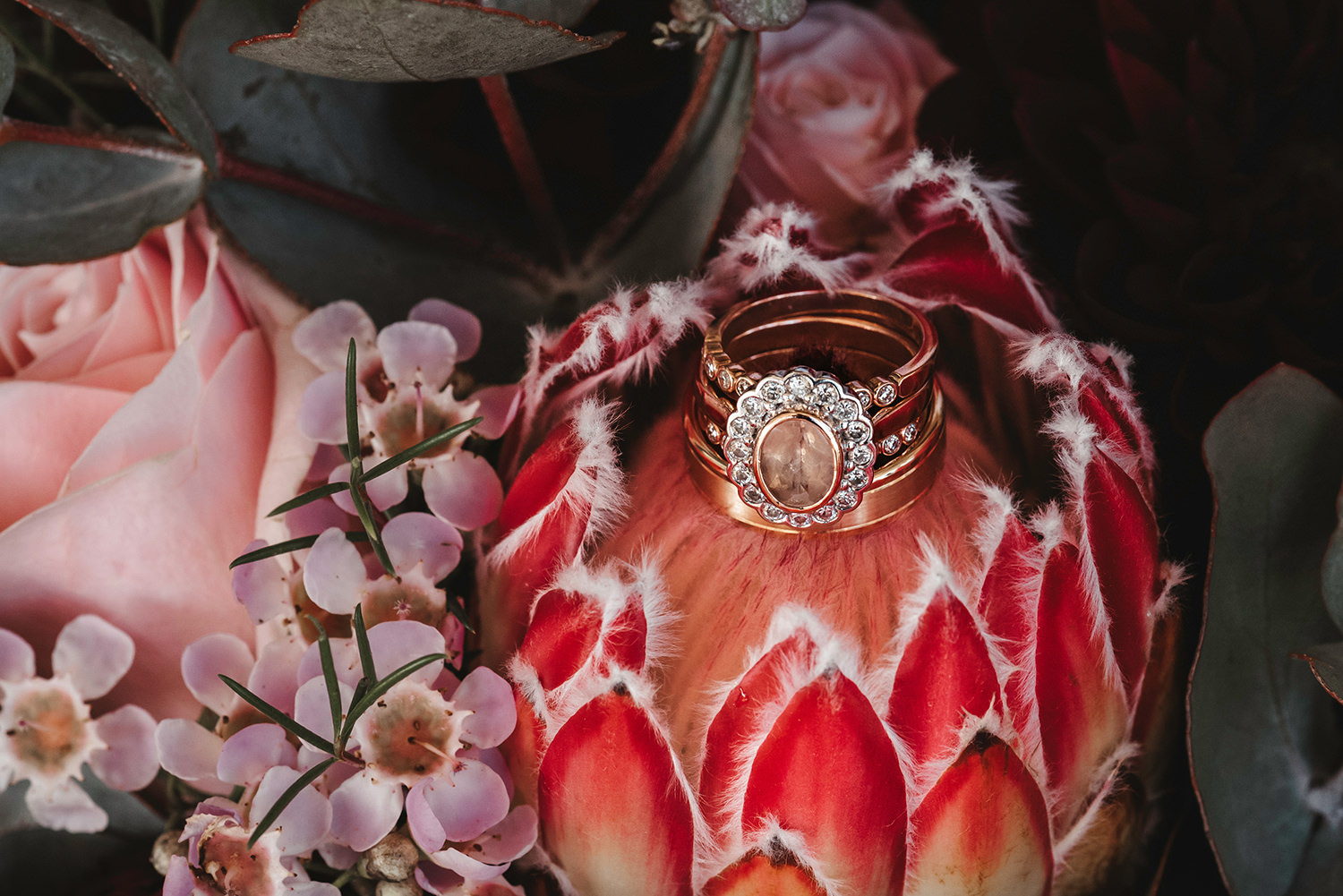 Wedding Rings sitting on a native flower surrounded by pink roses