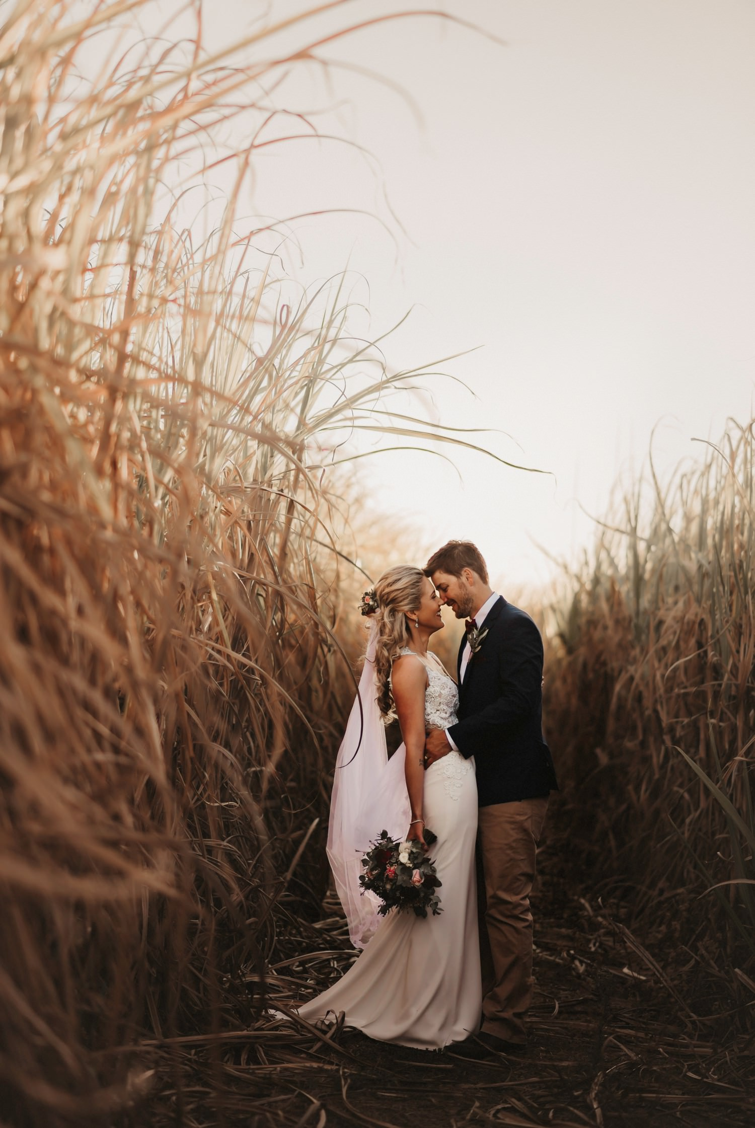 Bride and groom standing amongst golden coloured sugar cane.