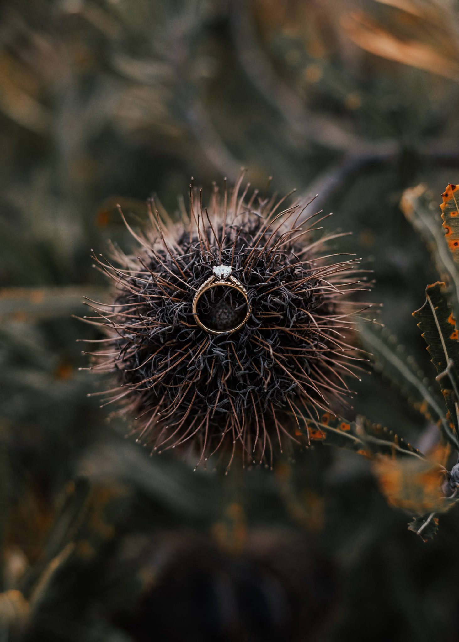 engagement ring on a banksia